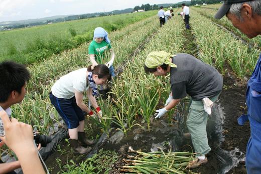 『ニンニク短期留学 2010』ニンニク畑で収穫体験の様子