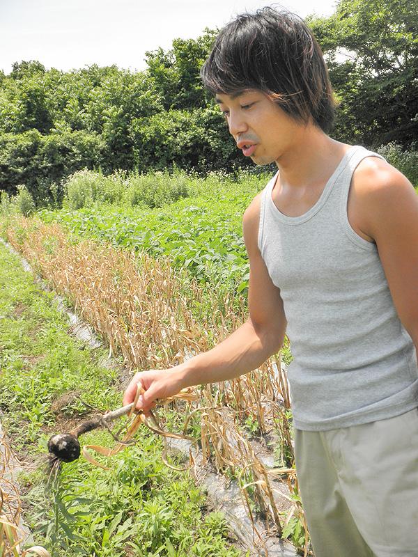 organic ユウファームでニンニクについて聞きました。【ニンニク短期留学2011】