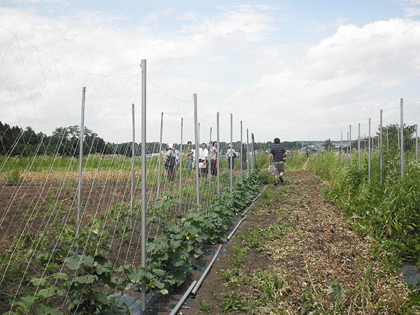 organic ユウファーム【ニンニク短期留学2011】